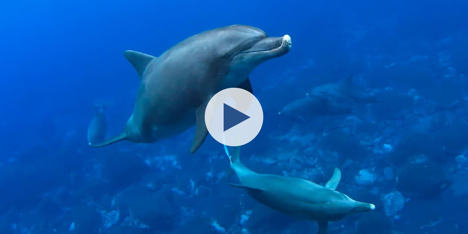海洋プラスチック問題について、イルカくんが教えてくれるよ!